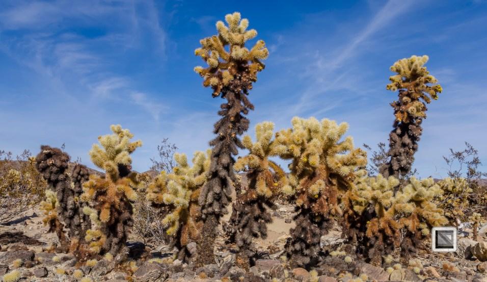 USA - California - Joshua national park-22