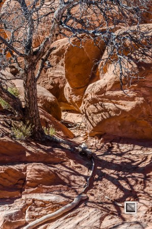 USA - Utah - Arches National Park-27