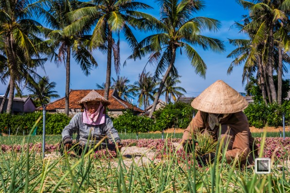 Ly_Son-Vietnam (171 von 197)