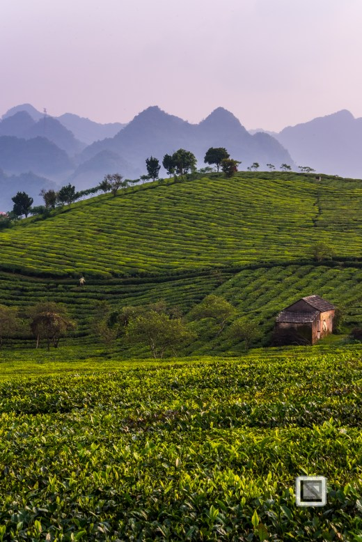 vietnam-moc_chau-son_la_province-58