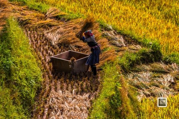 vietnam-mu_cang_chai-yen_bai_province-173