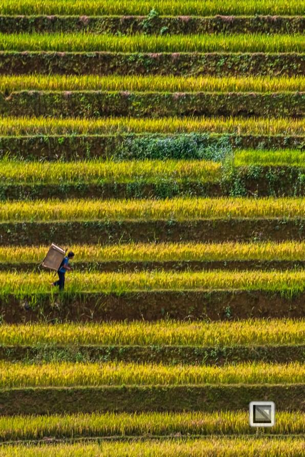 vietnam-mu_cang_chai-yen_bai_province_2-7-2