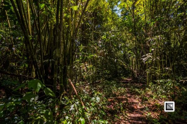 Malaysia-Sarawak-Mulu_Nationalpark2-37