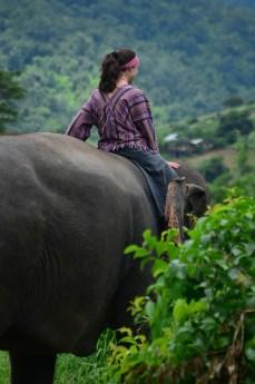 Passear com elefantes.