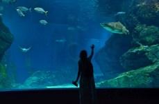Eu tentando chamar a atenção de um Tubarão- Photo Claudia Grunow