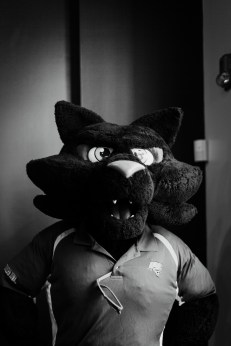 Meet this cool cat. Strength, unity, loyalty. Go Panthers.