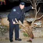 Boulder: It's not about the elk