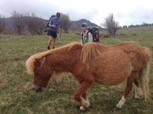 Appalachian Trail Grayson Highlands ponies