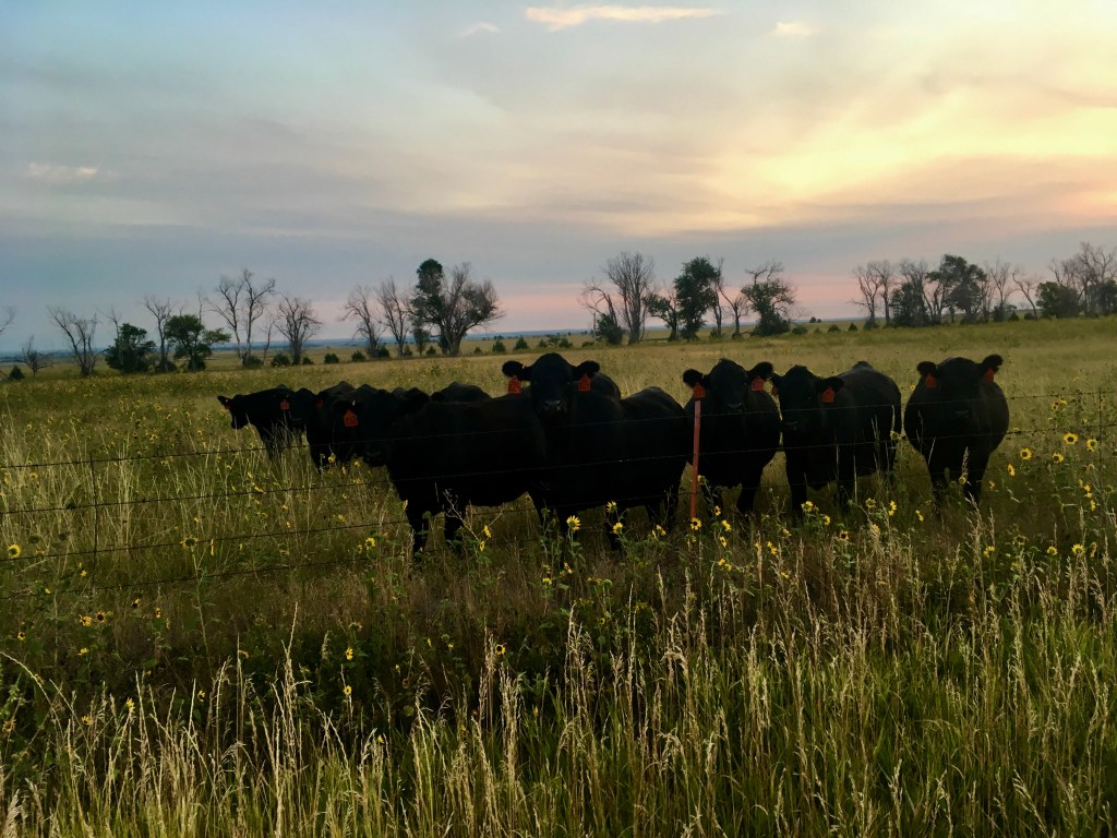 crawford nebraska cows clay bonnyman