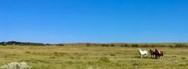 montrose road clay bonnyman Evans