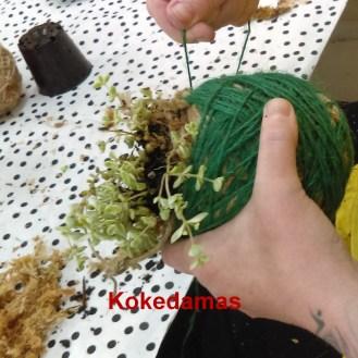 kokedama workshops at ClayMotion Ballarat Victoria