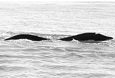 CS155. Photo credit: Jim Darling. 2006.