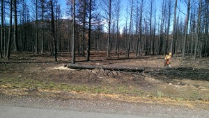 Weed Forest Fire Cleanup