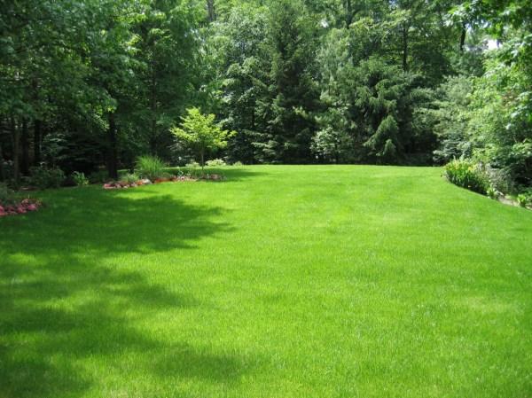 fall lawn care tips - clc landscape