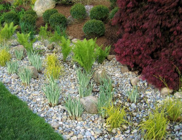 rain gardens dealing with stormwater
