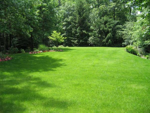 fall lawn care tips - clc landscape