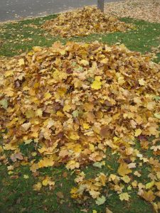 Leaves are a naturally occurring byproduct of trees