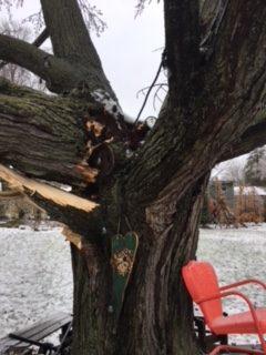 ice storm damaged tree