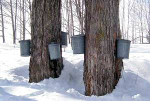metal pail maple syrup