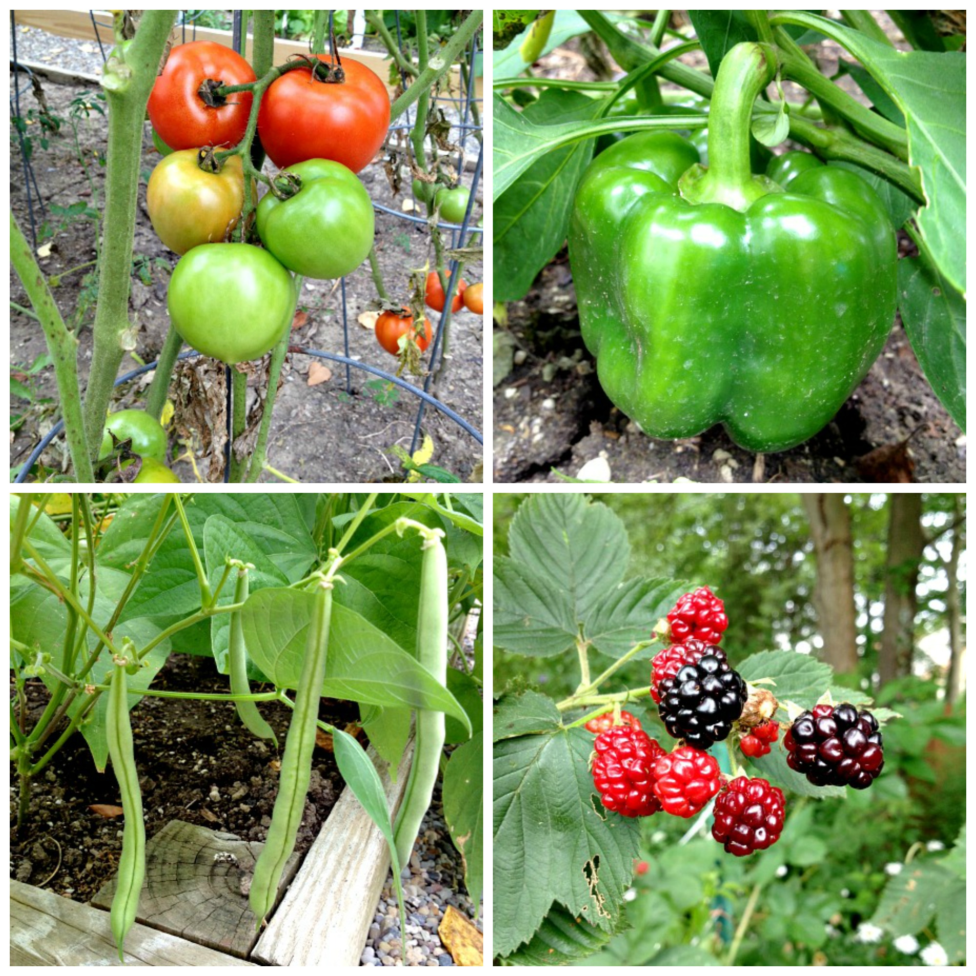 In-Laws Garden Collage