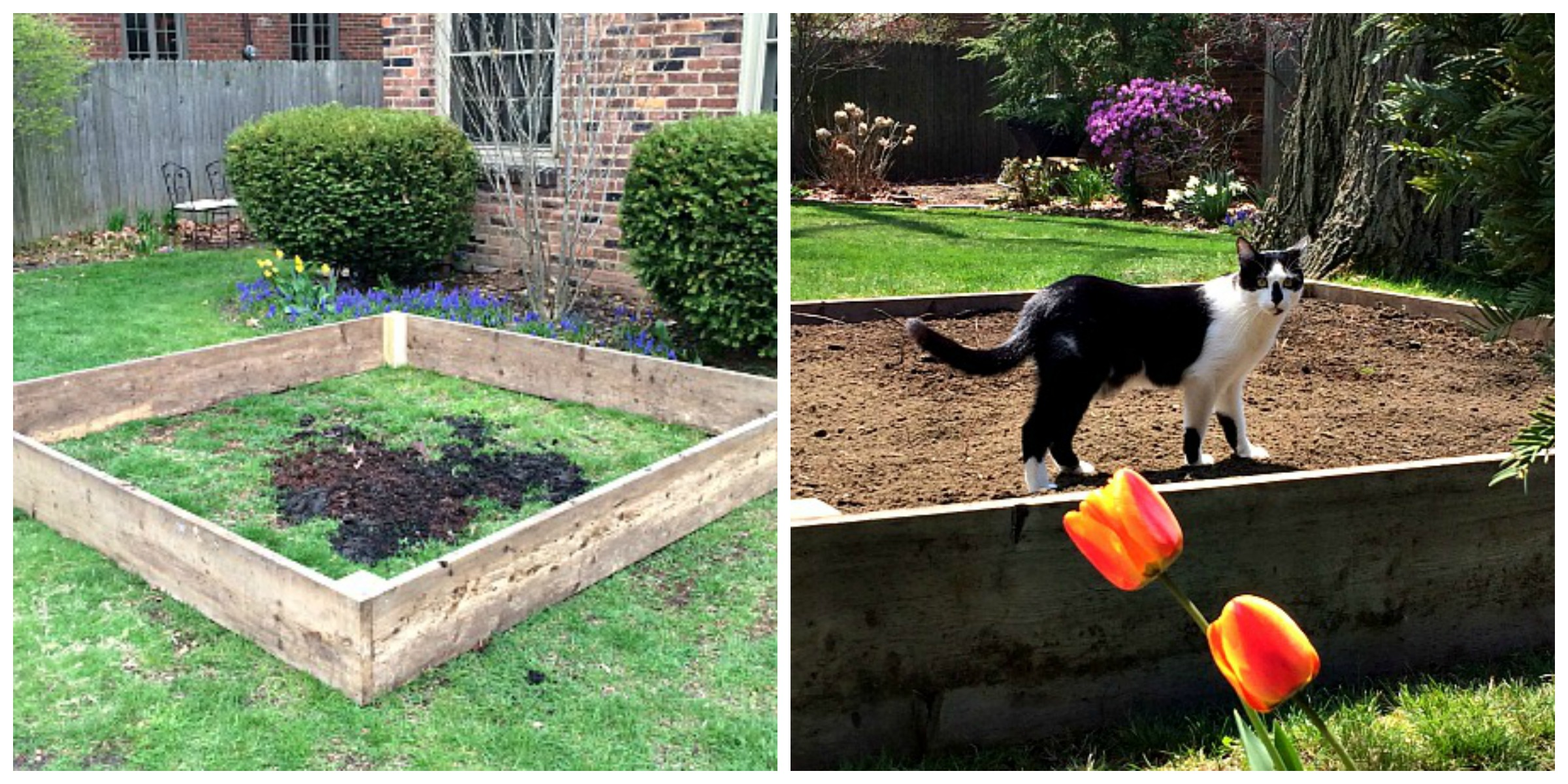 Riased Garden Bed Collage