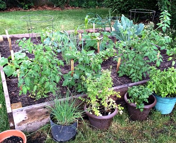 2014 Garden Progress Photo 06222014B