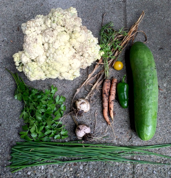 Garden Harvest Cauliflower, Parsley, Garlic, Carrots, Tomato, Jalepeno, Cucumber and Chives