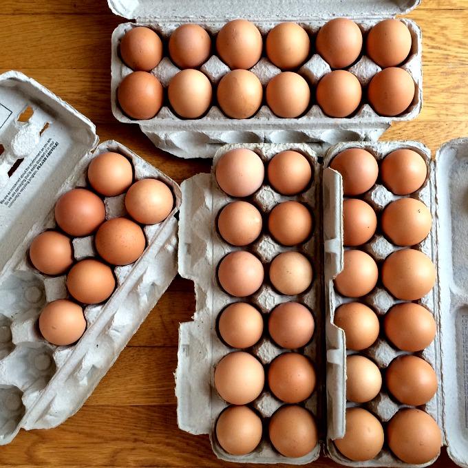 Eggs Galore