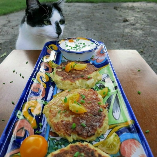 Oscar and the Kohlrabi Fritters