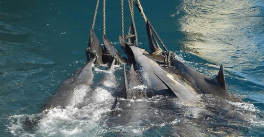 Depressing, Sadistic': Horrifying Photo Shows Entire Pod Of Whales Slaughtered By Hunters