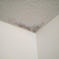 I have mold in the ceiling  what should I do