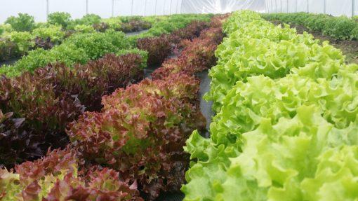 Middle TN, Dickson, Salad