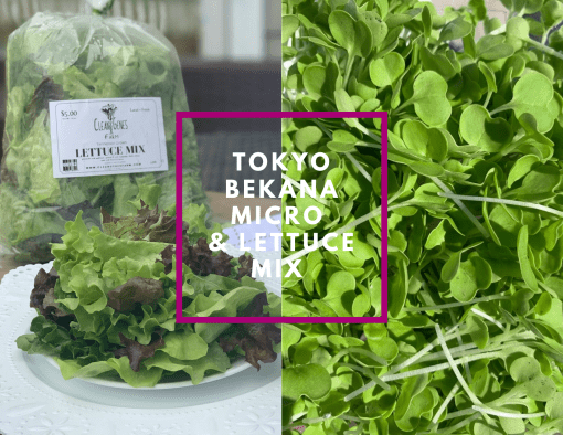 lettuce & tokoyo bekana