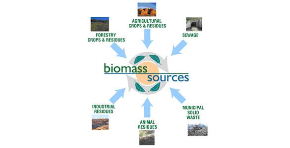 Biomass Sources