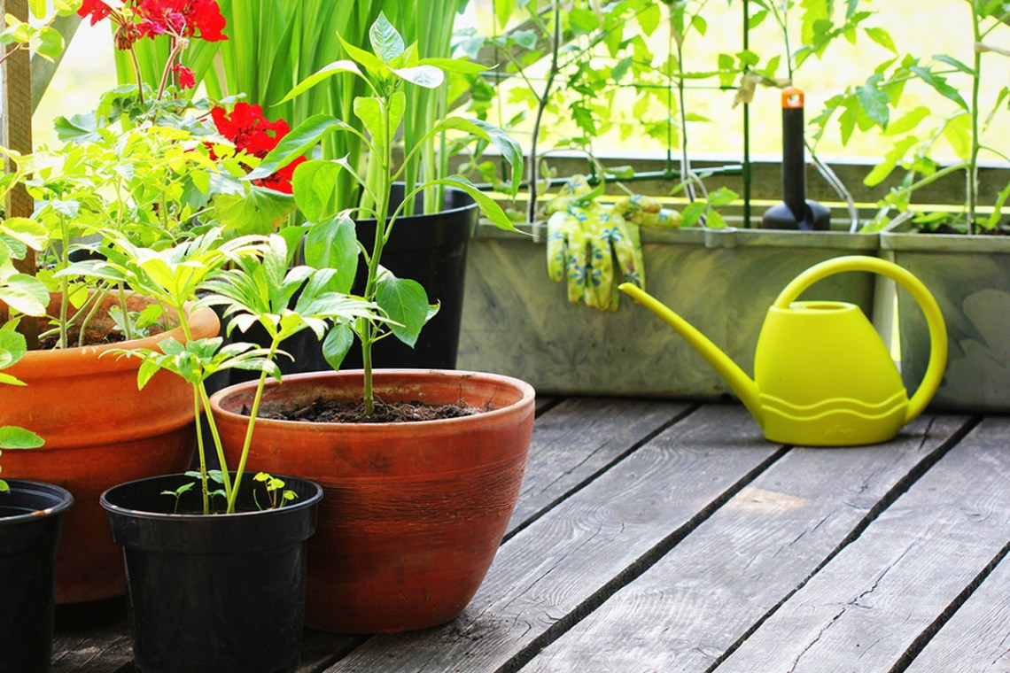 The 10 Easiest Vegetables To Grow In Pots Clean Green Simple