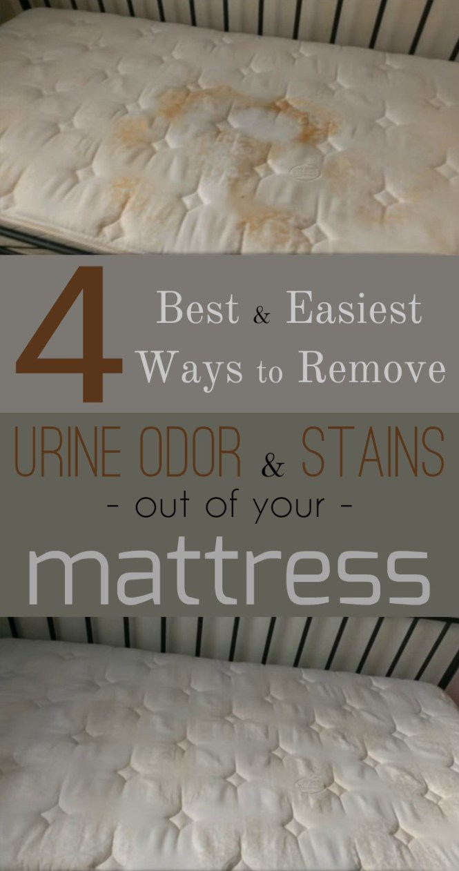 4 Best And Easiest Ways To Remove Urine Odor Stains Out Of Your Mattress Cleaning Ideas