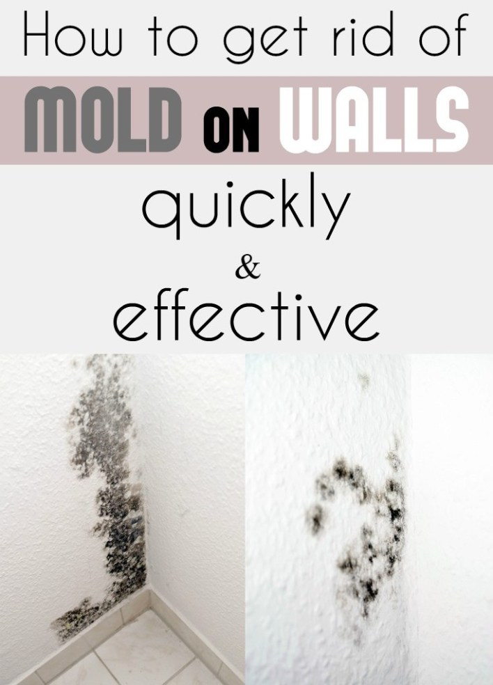 How to get rid of mould in bedroom www for How to clean mold off walls in bathroom