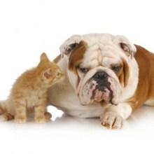 Pet Accident Treatments