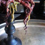 Keto Halloween Octopus