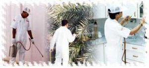 شركة مكافحة حشرات بالظهران شركة مكافحة حشرات بالظهران شركة مكافحة حشرات بالظهران 0503152005 Combating insects Dhahran Companys 300x138