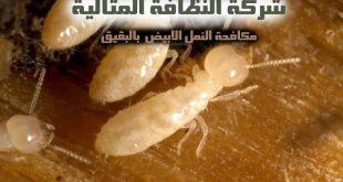 مكافحة النمل الابيض بالبقيق