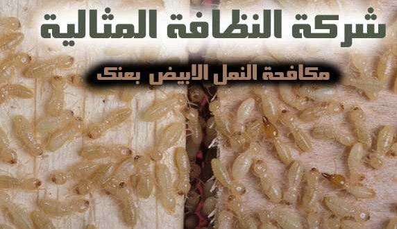 مكافحة النمل الابيض بعنك