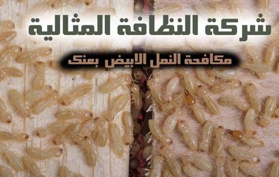 شركة مكافحة النمل الابيض بعنك 0562198010