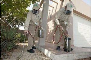 شركة مكافحة حشرات بالخبر شركة مكافحة حشرات بالخبر شركة مكافحة حشرات بالخبر 0562198010 Combating insects Companys in Khobar