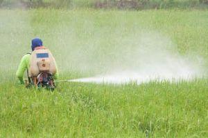 شركة رش مبيدات بالاحساء شركة رش مبيدات بالاحساء شركة رش مبيدات بالاحساء 0503152005 Pesticide spraying Companys Ahsa 300x200