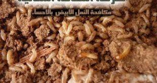 مكافحة النمل الابيض بالاحساء