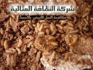 شركة مكافحة النمل الابيض بالاحساء 0562198010