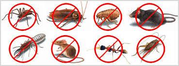 شركة مكافحة حشرات بالدمام 0531390740