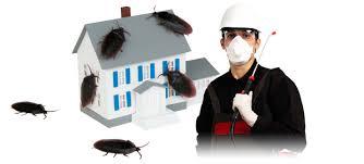 شركة مكافحة حشرات براس تنورة 0531390740