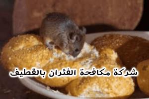 شركة مكافحة الفئران بالقطيف شركة مكافحة الفئران بالقطيف شركة مكافحة الفئران بالقطيف 0503152005 img1491772924991